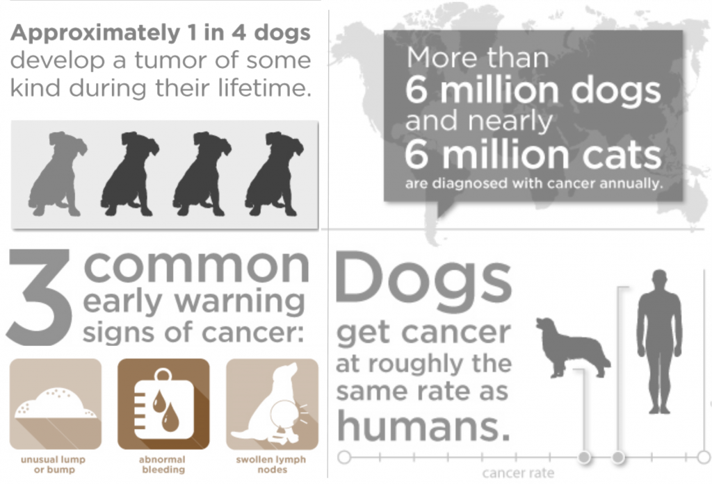 dog cancer statistics