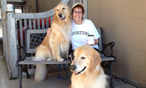 cape cod golden retrievers